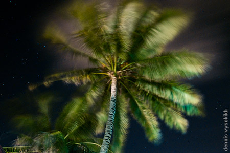 palm_pic