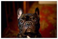 mydog2